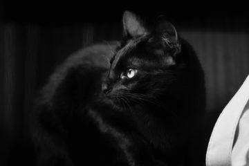 Edgar Allan Poe El Gato Negro
